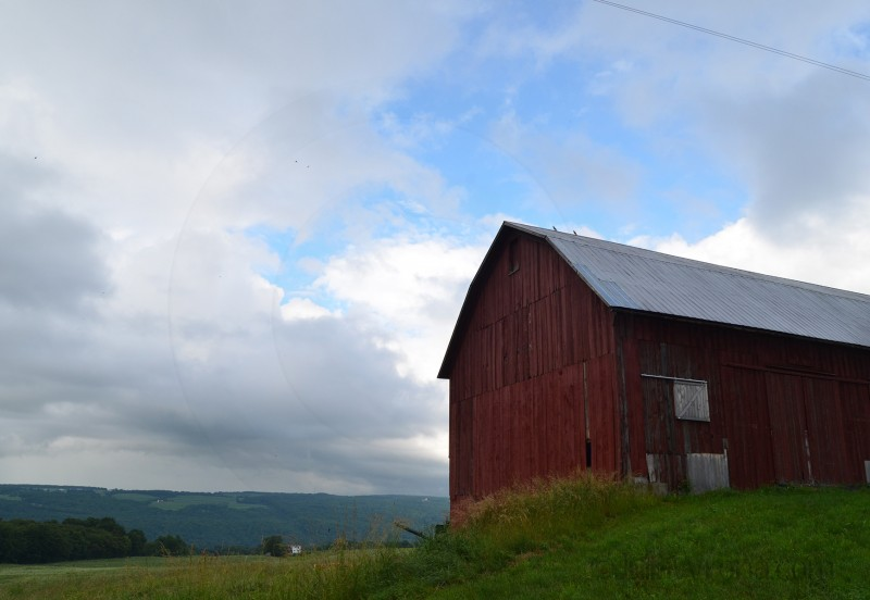 Finger Lakes Farm