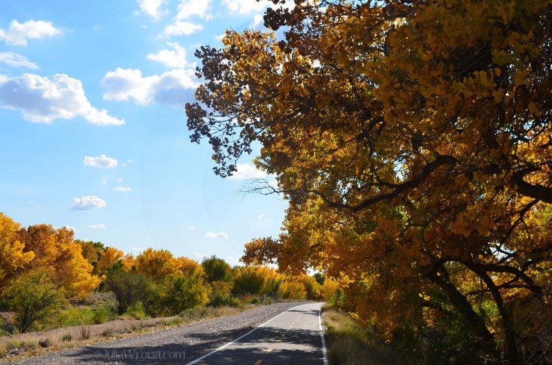 Bosque Trail in Rio Rancho, New Mexico