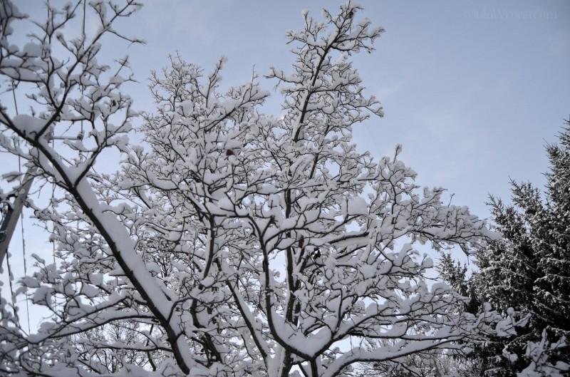 Snow in Skaneateles, New York