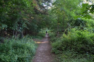 The trail I walked to every morning in Pelham.
