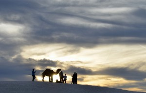 Camel at Sunset at White Sands National Park