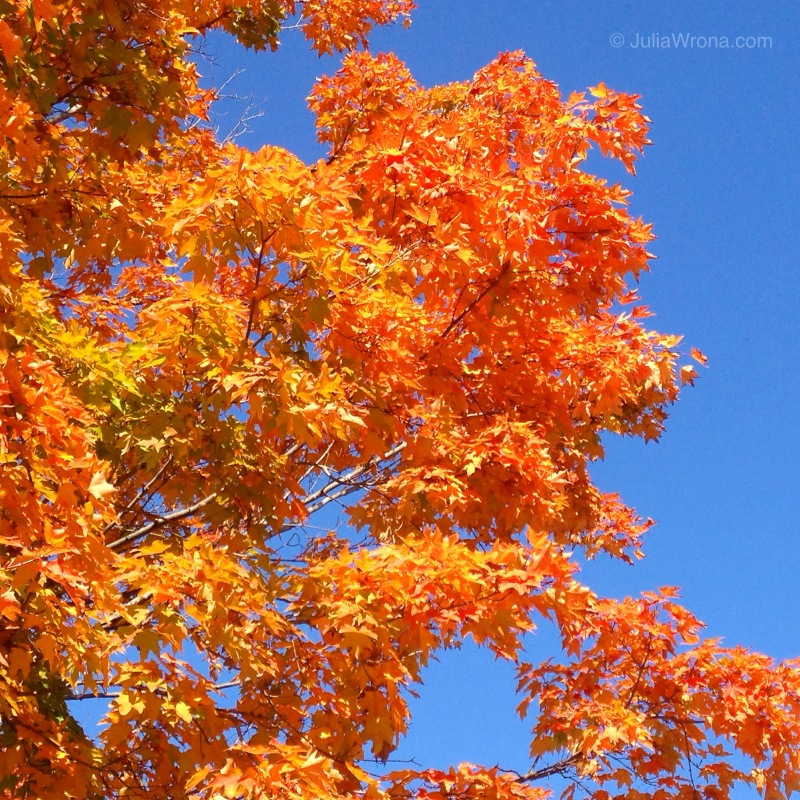 Bright Orange tree in Autumn
