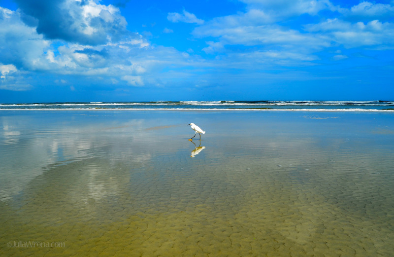 Bird reflected in the ocean