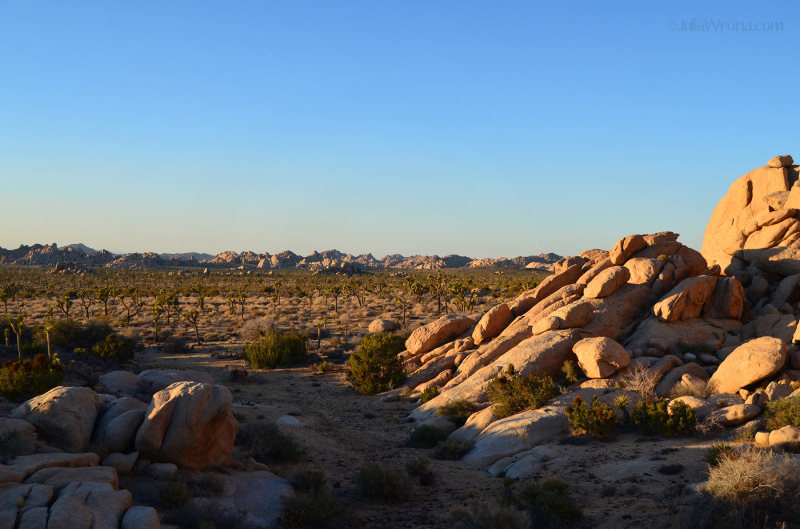 View from a boulder of Joshua Tree landscape