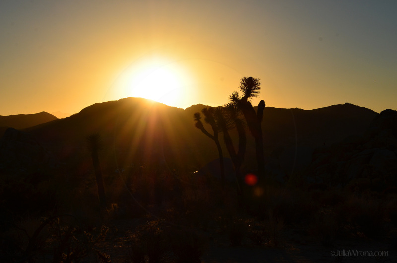 Sunset behind mountains and a joshua tree
