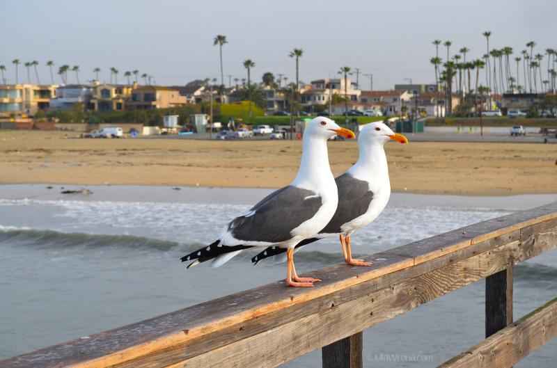 Seagulls at Seal Beach