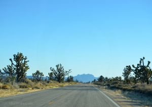 JKW_8606web Driving through the Mojave National Preserve.jpg