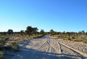JKW_8619web Sandy Road through Mojave.jpg