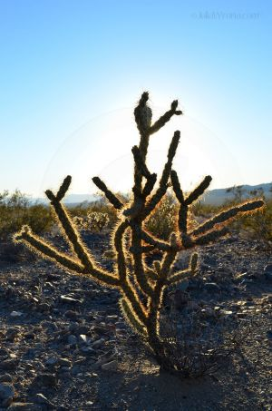 JKW_8645web The Glow of a Cactus.jpg