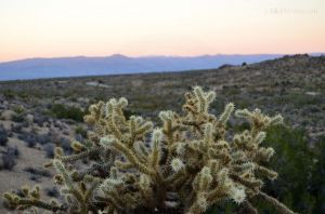 JKW_8747web Sunset behind the Cholla.jpg