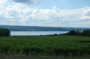 DSC_0399web Vineyard on Seneca Lake.jpg